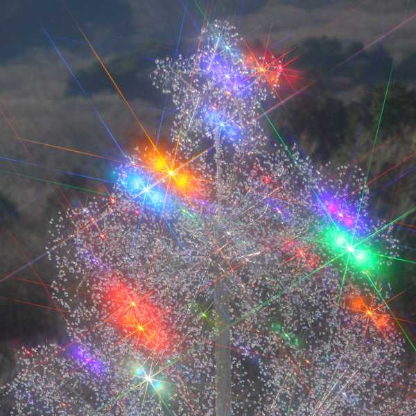 クリスタル・ガラスのクリスマスツリー