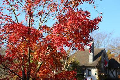紅葉の山々とガラス庭園